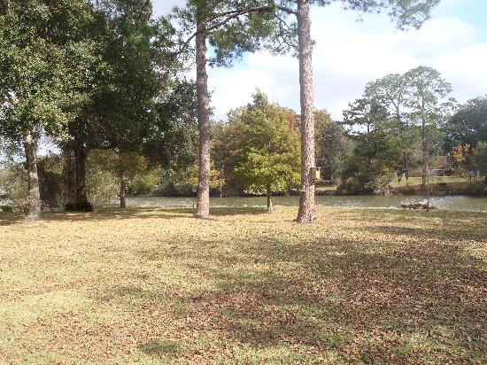 Bayou Rose Bed & Breakfast Cottage: View from cottage porch