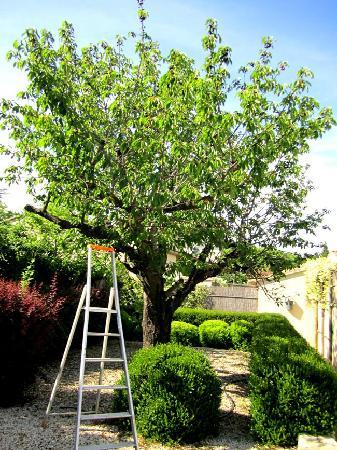 La Maison de Line : The Cherry Tree (Dessert every day!)