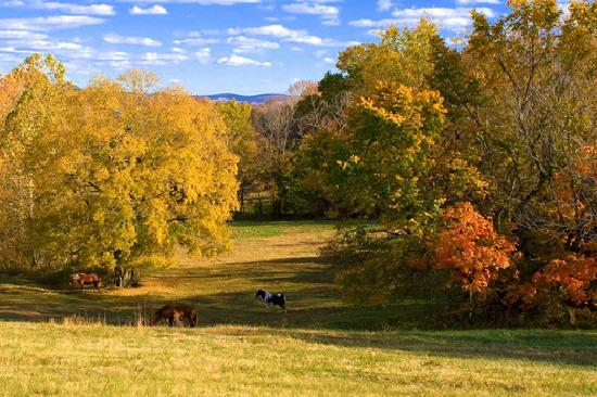 Fall Foliage In Wilson County Picture Of Lebanon
