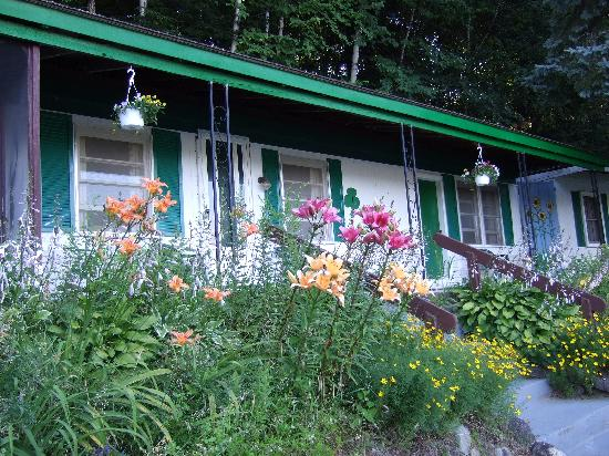 The Shamrock Motel: cottage 1 in full bloom