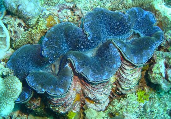 Unter Wasser bei Crocodile Island