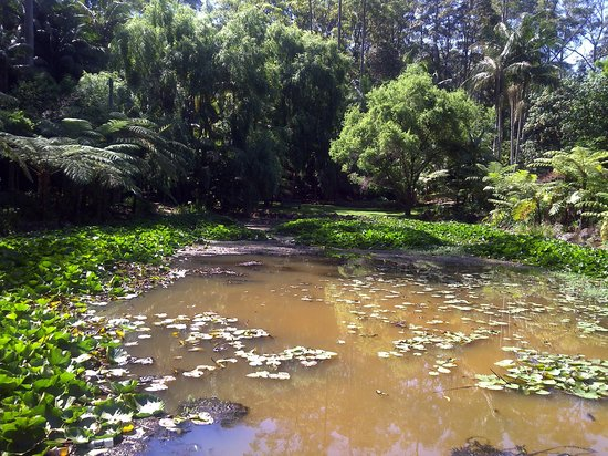 Tamborine Mountain Botanic Gardens: A view of the lake area