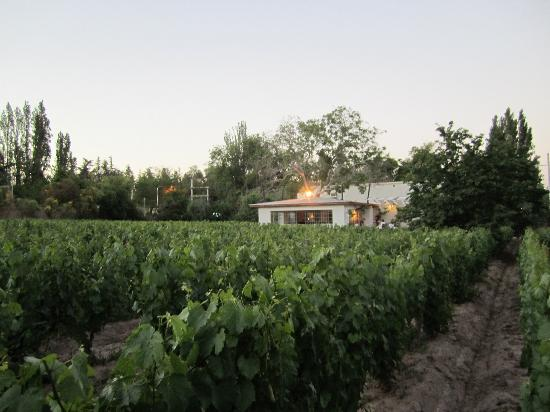 ‪فينكا أدالجيسا: View of vineyards from pool area‬