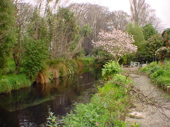 Anselm House: Look for trout in Avon River