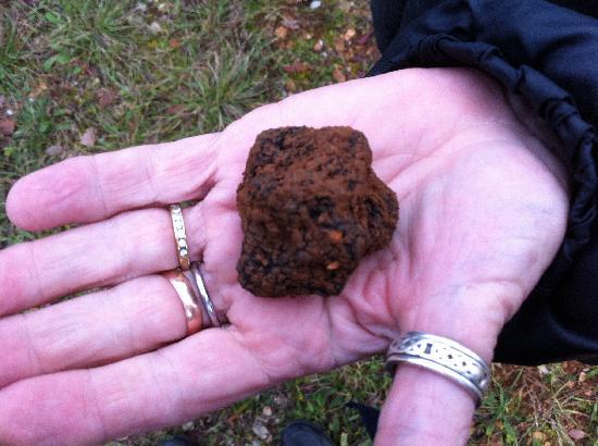 Truffiere des Merigots: Première truffe de la journée