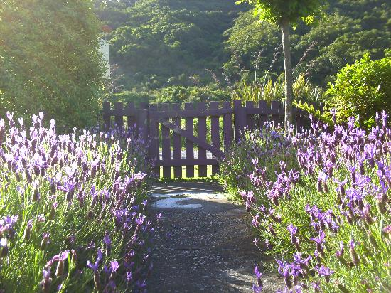 Natural Encounters Walks - Day Tours: Front garden at Fernview