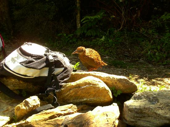 Natural Encounters Walks: Greg can provide a handy day pack - Weka tested :)