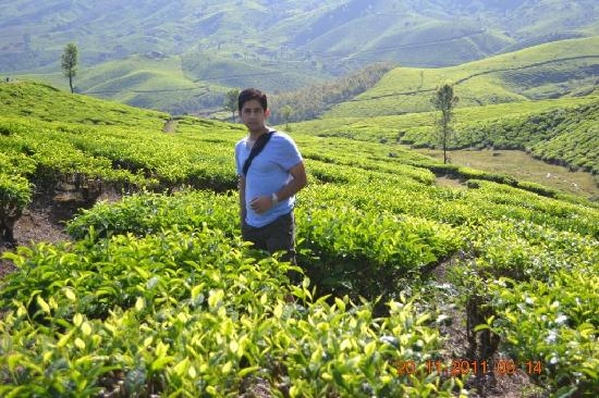 Tea estates Munaar - Picture of Tea Gardens, Munnar - TripAdvisor