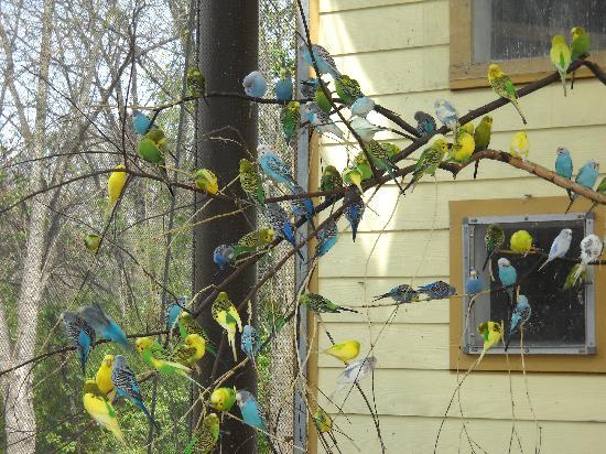 Zoo Atlanta: Parakeet House