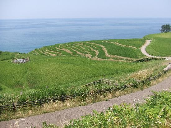 Shiroyone Semmaida : 棚田の風景1
