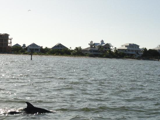 isla de Captiva, FL: Some of the dolphins we saw.  They move fast so it was a little difficult to catch them on my sl