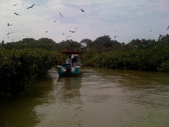 Los Manglares de Puerto Pizarro: Navegando entre la Isla de las Avez