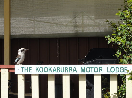 Kookaburra Motor Lodge: Daily Visitor
