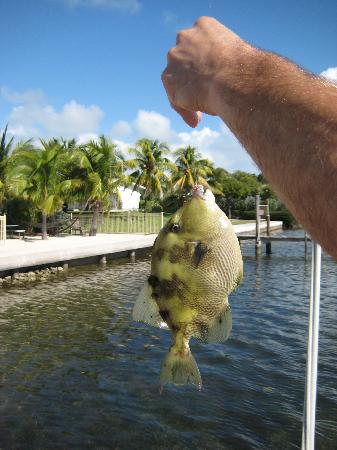 Fish caught on the dock