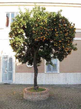 Clementine Tree In The Kolbe Garden Picture Of Kolbe Hotel