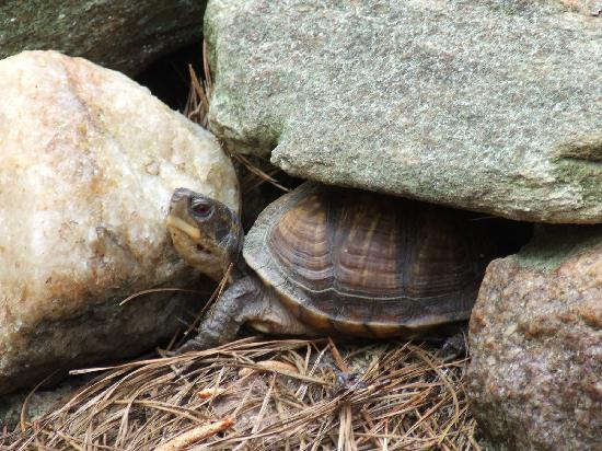 Louise Kreher Forest Ecology Preserve & Nature Center: Turtle from turtle habitat