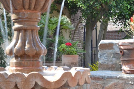 Todos Santos Inn : Garden3