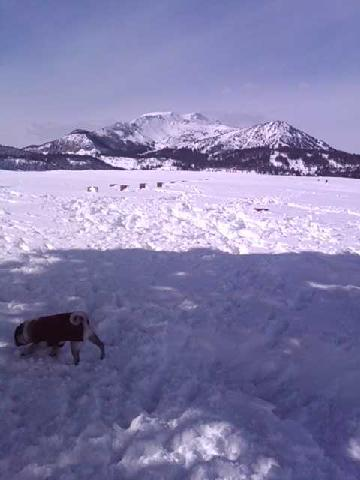 Mammoth Lakes Bring Your Dog Tripadvisor