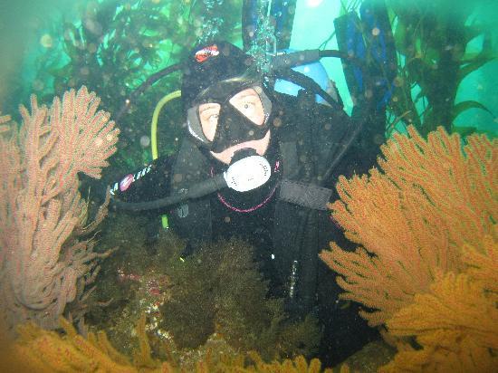 Diving Catalina: photo op