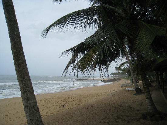 Coconut Grove Beach Resort: beach