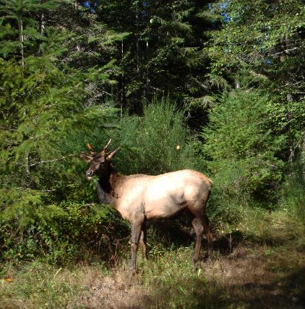 """Alta Crystal Resort at Mount Rainier: Some of our other """"guests"""" who come to visit."""