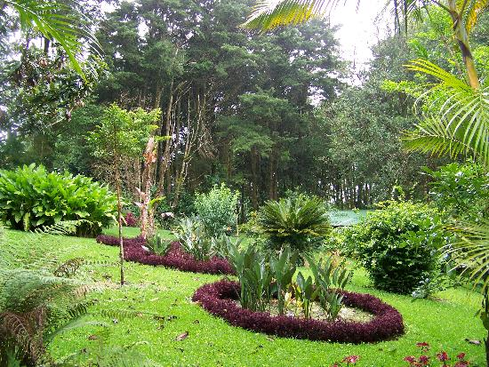 Foto de los pinos cabanas y jardines cerro plano for Pinos para jardin