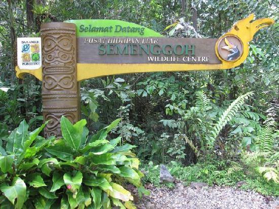 Semenggoh Nature Reserve: Semenggoh Wildlife Rehab Centre