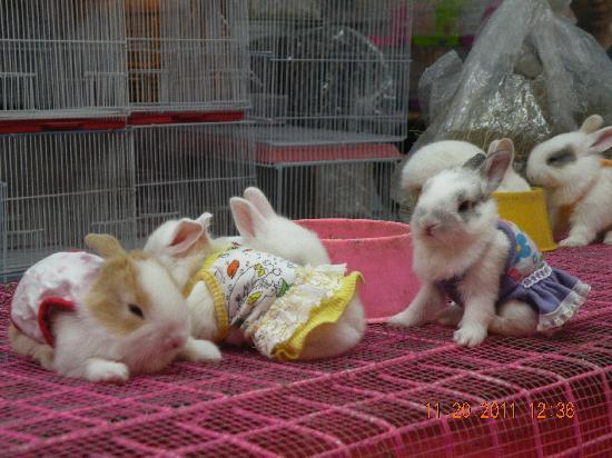 Chatuchak Weekend Market: bunnies for sale