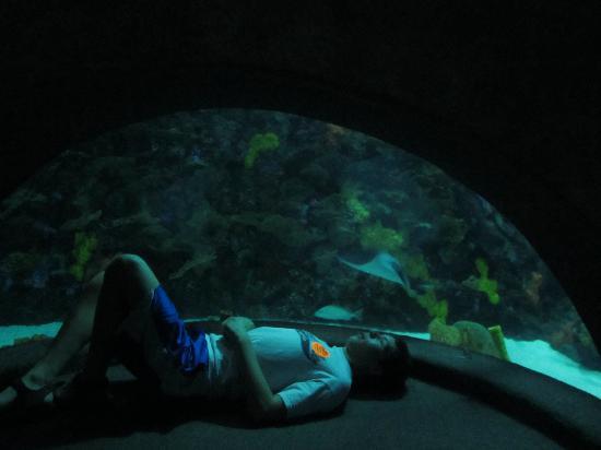 Sting Ray Exhibit Picture Of Tennessee Aquarium
