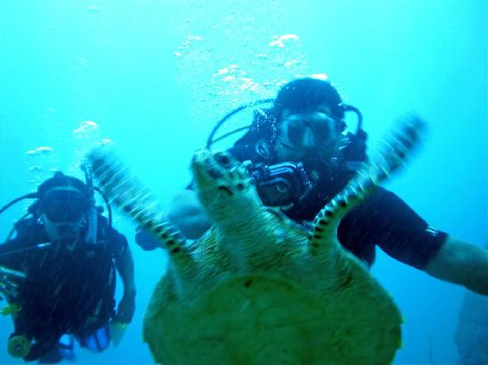 Oceanic Divecenter: Ed & Pao and the turtle
