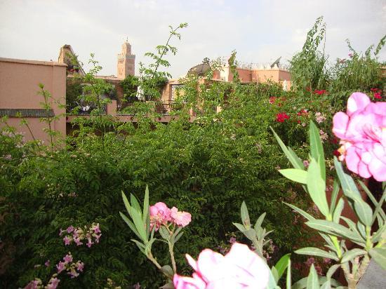 Riad Alamir : vue de la terrasse