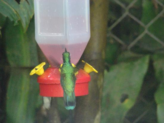 Monteverde Rustic Lodge: Hummingbird feeders