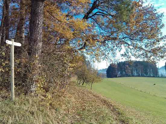 Grenzwanderweg Flawil: Weg in der Nähe von Degersheim