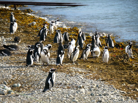 Solo Expediciones: Magellan-Pinguine