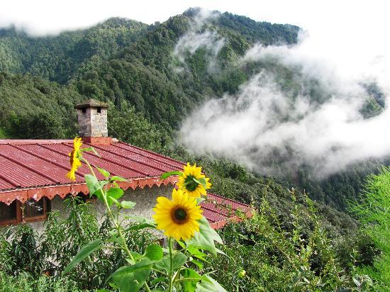 Jungle Lore Birding Lodge: Amazing location