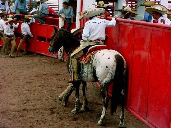 Rancho Las Cascadas Riding Tours: Rancho Las Cascadas