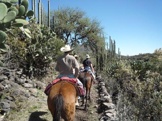Rancho Las Cascadas Riding Tours