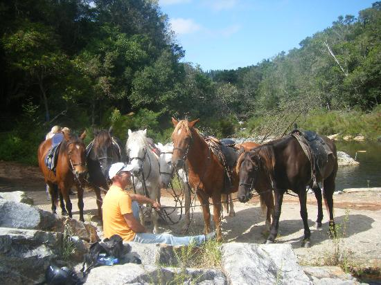 Garden Route Horse Trails : Brus at the waterfall