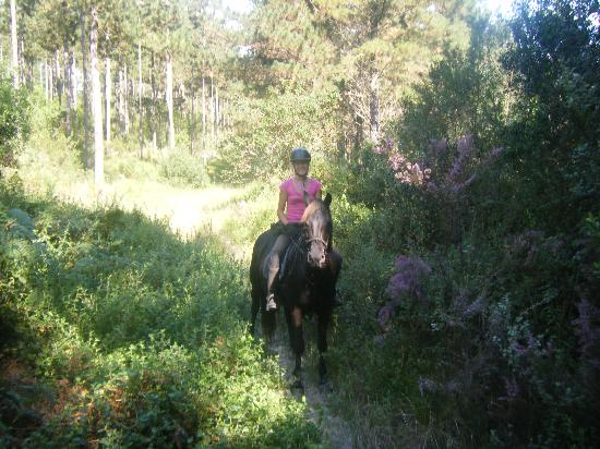 Garden Route Horse Trails : Black Beauty in the peaceful forest