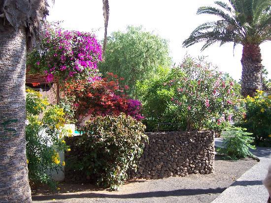 Ona Las Brisas: mature shrubs in flower