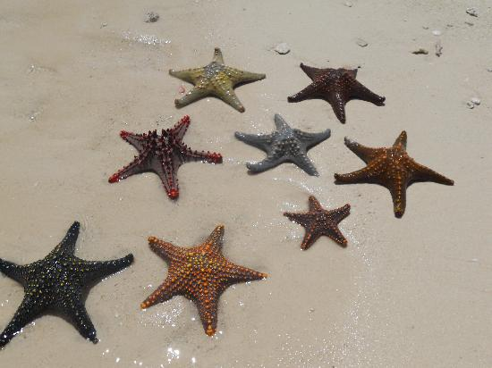 VOI Kiwengwa Resort : stelle marine