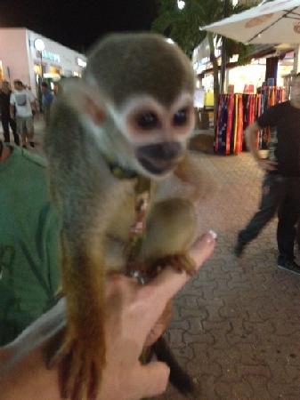 Hotel El Tukan: monkey in Carmen