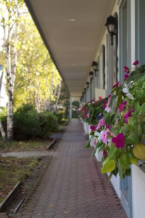 Sun & Ski Inn and Suites: Pathway to the rooms