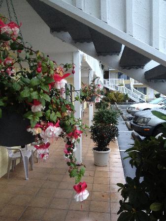 Best Western Garden Villa Inn : Beautiful florals