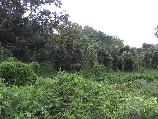 Birpara, Индия: Elephant - Chilapata Forest