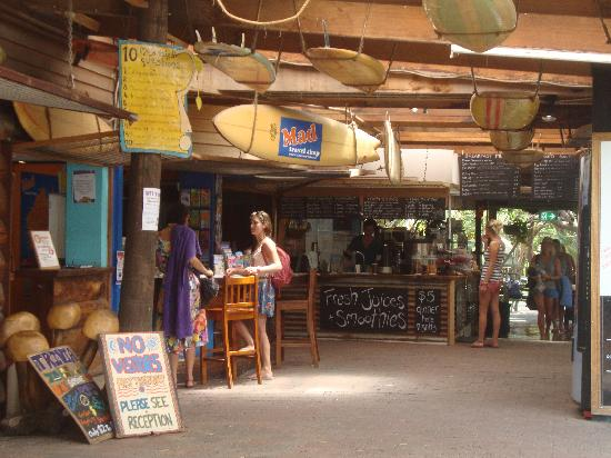 The Arts Factory Backpackers Lodge: The Reception Area and Cafe