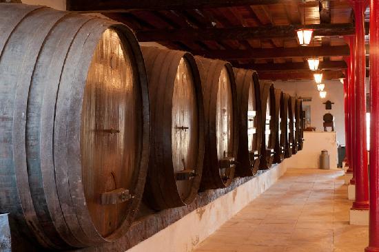 Quinta do Campo : Adega Wine Cellar