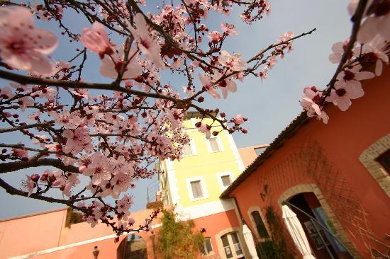 Masseria Sant'Agapito: in fiore