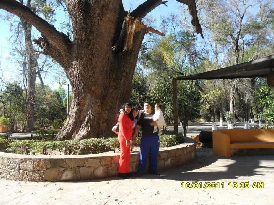El Marques Hacienda Hotel: las areas verdes