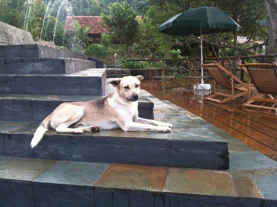 Awanmulan: Daniel the friendly dog